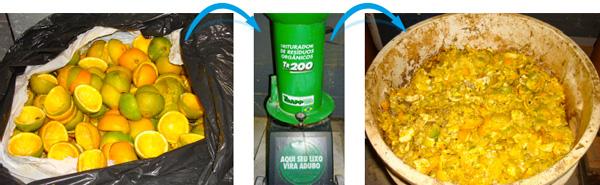 Alimentos antes e depois de passar pelo triturador