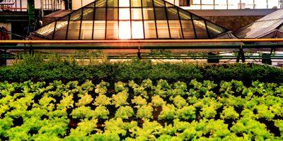 Shopping Eldorado e sua horta no telhado