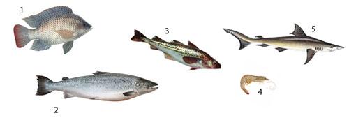 Peixes mais consumidos no Brasil
