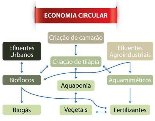 Figura - O papel central da tilápia em uma Economia Circular
