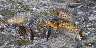 fábrica de peixes